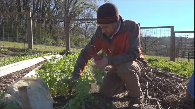 Cam Terry is the farmer for Carilion's Morningside Urban Farm in southeast Roanoke. Here he's...