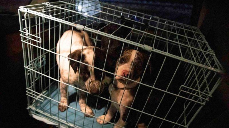 Van transporting 13 puppies rolls over in Utah