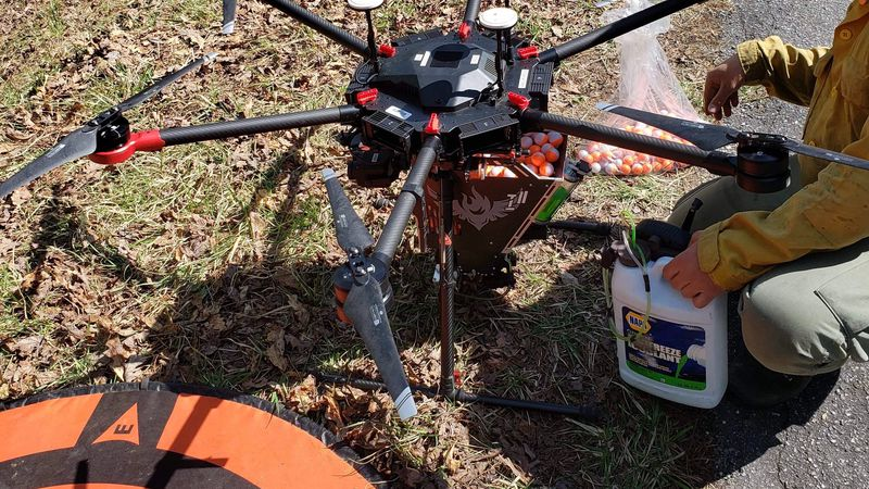 A forest manager is preparing a drone that will light fires as part of a prescribed burn.