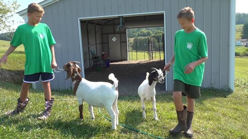 Lincoln and Ephraim Kellerman have been working hard to get their goats ready for the Botetourt...