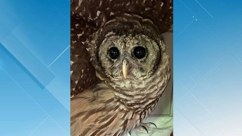 The Southwest Virginia Wildlife Center of Roanoke will be releasing a Barred Owl back into the...