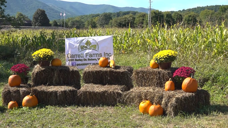 The corn maze and pumpkins available at the Garrett Farms Fall Festival.
