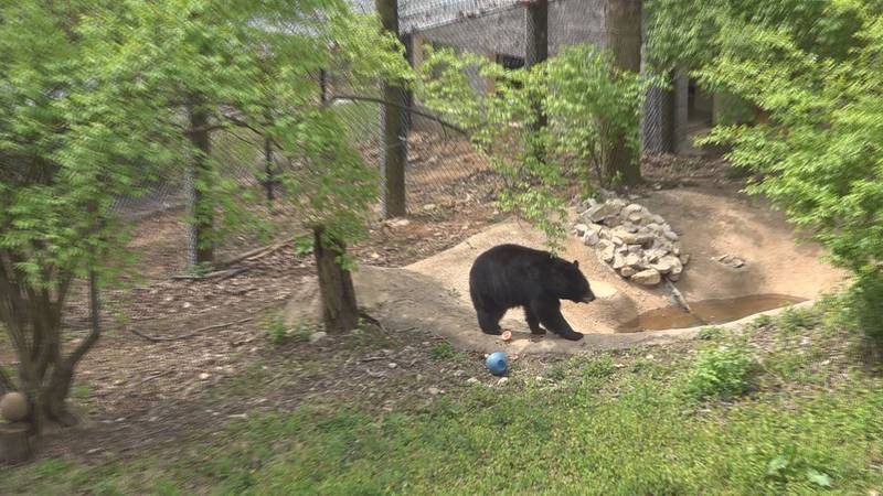 Mill Mountain Zoo has new animals and new leadership