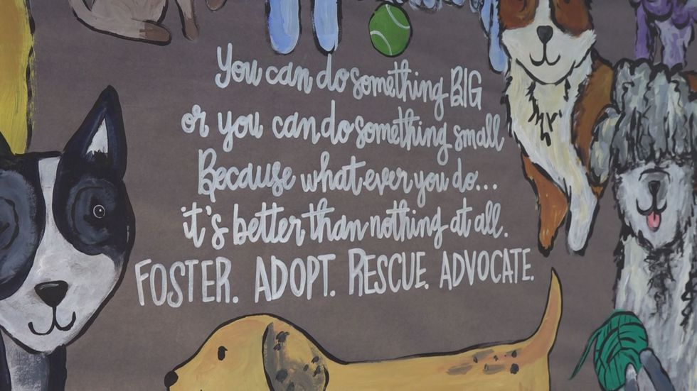 Wall murals decorate the Campbell County Animal Shelter.