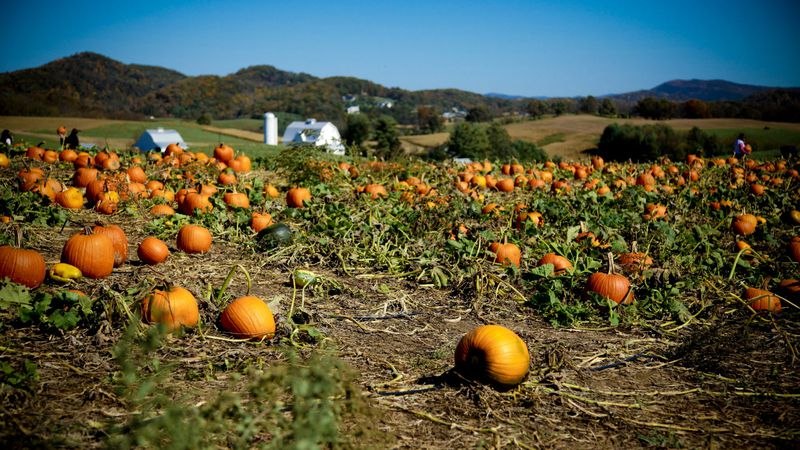 For 29 years Sinkland Farms in Christiansburg has been bringing us its annual pumpkin Festival,...