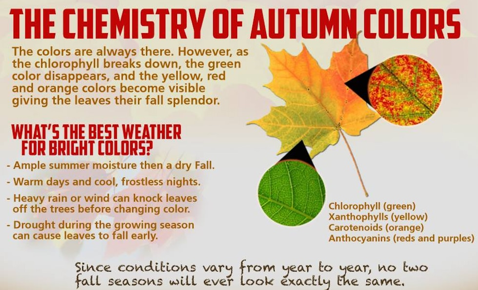 The science behind fall foliage.