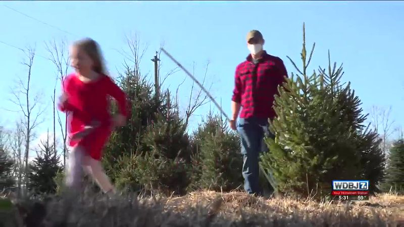 The Search For A Christmas Tree With Valley Green Farm Radford