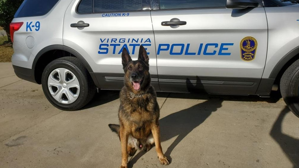 """""""Rudco"""" in front of a Virginia State Police vehicle."""