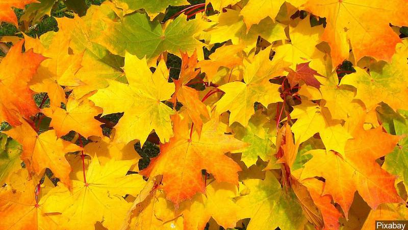 If weather is an indicator, the fall colors could be the best in several years.
