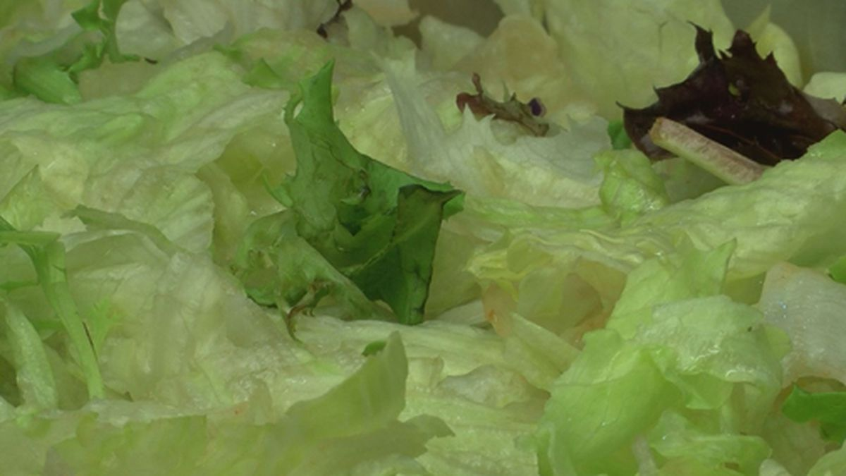 The U.S. Department of Agriculture says Missa Bay, LLC from Swedesboro, New Jersey, is recalling more than 75,000 pounds of salad products that contain meat or poultry because the lettuce may be contaminated with a strain of E. coli. (Source: WALB)