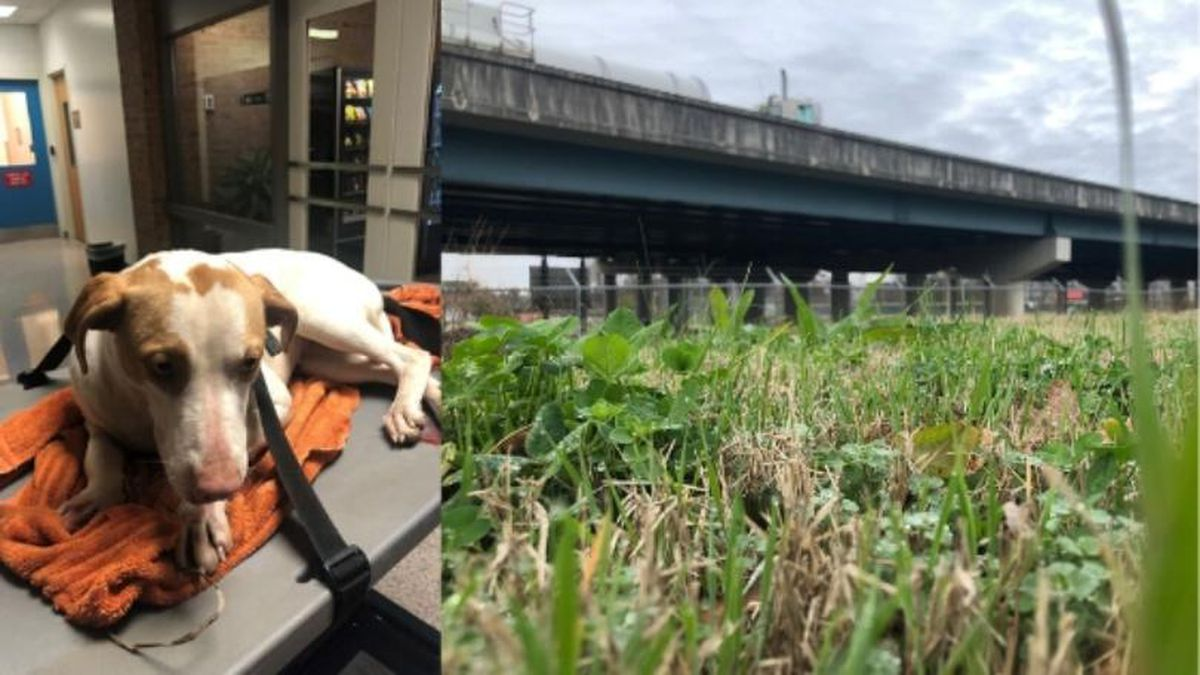 Police are investigating after they say a puppy was thrown from an overpass / Source: (WVLT/ KPD)