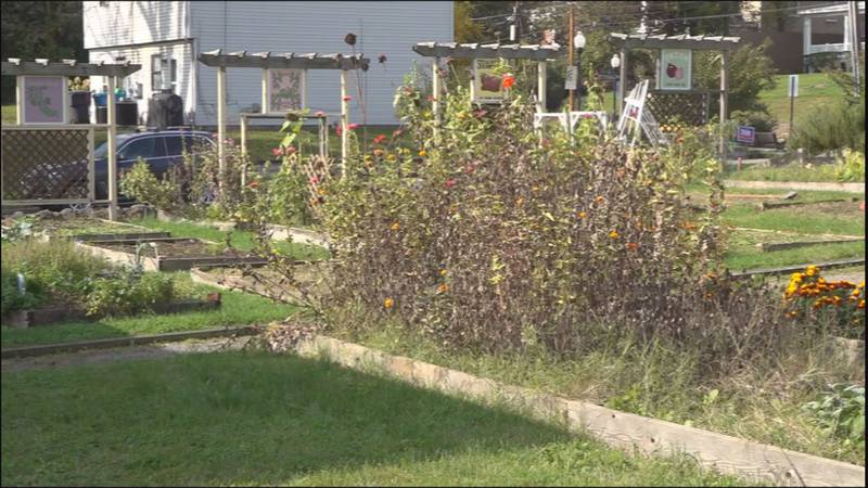 It's the end of the growing season for many gardeners who have plots at the Mountain View...